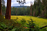 Hidden Meadow in Sequoia National park